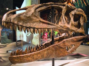 اكتشاف ملك الديناصورات الأصلي