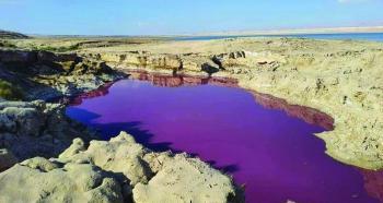 طحالب وبكتيريا تلونالبحر الميت بـ«الأحمر»