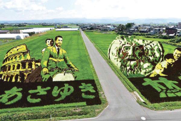 لوحات فنية في حقول الأرز