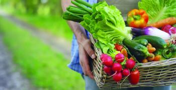 البيع داخل المزارع يكسبك ثقة المشتري
