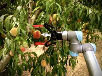 ابتكار روبوت أمريكي لقطف ثمار الخوخ