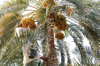 «زراعة الشرقية» تحتفي بيوم الزراعة العربي بالأحساء