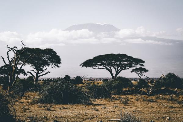 دراسة: أفريقيا الأكثر تضررا جراء الاحترار العالمي