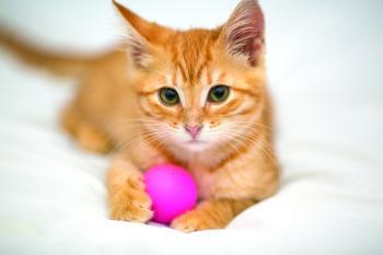 التعامل المباشر مع القطط قد يسبب مرض الذهان