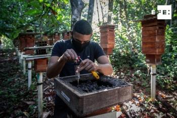 إنتاج العسل.. مبادرة لحماية غابات الأمازون