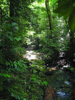 إعادة ملكية أقدم غابة ممطرة لسكانها الأصليين