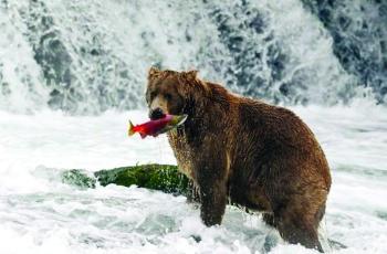 تسمية «الدب السمين» في أكتوبر