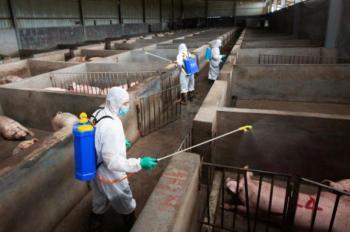 الكشف عن لقاح جديد لمكافحة حمى الخنازير الأفريقية