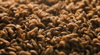 حشرات تحول بقايا الطعام إلى سماد ومستحضرات تجميل