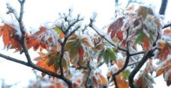 سيئول تشهد أبرد يوم منذ 67 عامًا