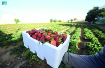 «الزراعة في عسير».. مهنة عريقة تدعمها إمكانيات المنطقة
