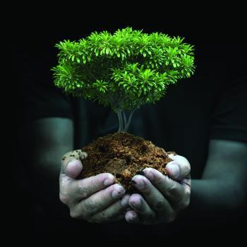 «السعودية الخضراء والشرق الأوسط الأخضر» تؤكدان ريادة المملكة في حماية الأرض والطبيعة