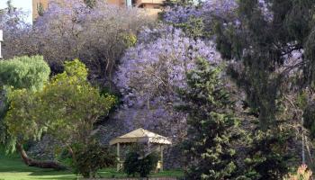 2200 نوع من النباتات تشكل الغطاء النباتي في المملكة