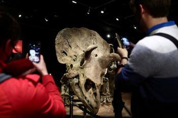 بيع رفات ديناصور بأكثر من 7.5 مليون دولار