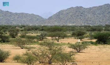 «الغطاء النباتي».. يمنح المملكة ريادة «الحقبة الخضراء» القادمة