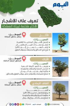 تعرف على الأشجار الأكثر ملائمة لبيئة المملكة