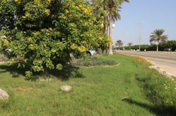 زراعة 600 شجرة لمعالجة التشوه البصري بالشرقية